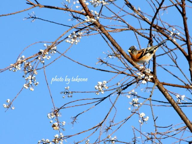 冬の木の実