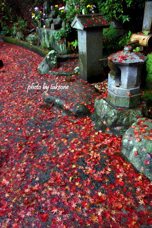 秋の終わりの紅